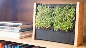 Vertical Garden Frames - save time and space with this fast growing vertical garden from