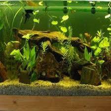 aquarium decoration ideas freshwater aquarium decoration ideas apk download free lifestyle app for