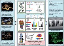 biological materials and molecular biomimetics u2013 filling up the