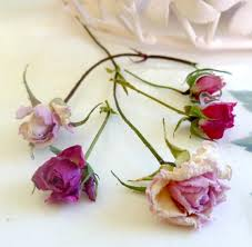 dried rosebuds dried roses wedding decorations craft