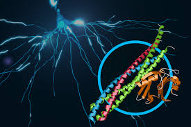 Web Accelerators Title Scientists Discover Atomic Resolution Details Of Brain Signaling