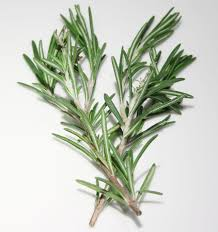 Rosemary Topiary Rosemary Herb Seeds Rosemary Rosmarinus Officinalis Grow Your