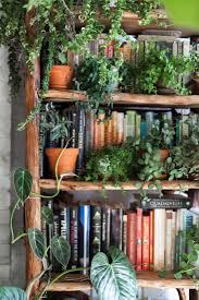 best 25 apartment plants ideas on pinterest air cleaning plants