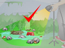 how to create a habitat for a toad 12 steps with pictures