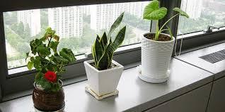 plant on desk desk plants best new arrive decorative flower pots planters