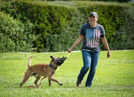 belgian shepherd navy seals the power of checking out 4 steps to boost your dog u0027s engagement