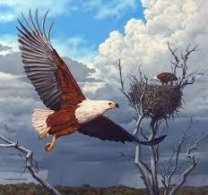 realistic art paintings african fish eagles u2013 2007 johan