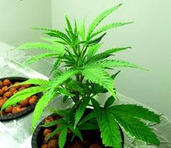 proper lights for growing weed mh hps grow light tutorial plus cheap ways to exhaust heat grow