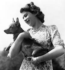 Queen Corgis The Most Pampered Pooches In Britain A Look At The Queen U0027s Corgis