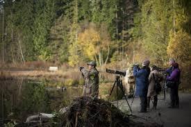 park lovers debate as silt fills stanley park u0027s beaver lake the