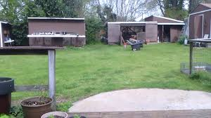 racing pigeons getting home 25 mile toss youtube