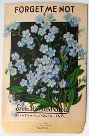 forget me not seed packets 99 best forget me nots images on forget me not church