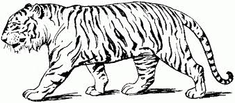 tiger coloring book pages