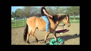 kiger mustangs for sale kiger mustang mare for sale