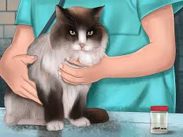 how to prevent ticks on cats 13 steps with pictures wikihow