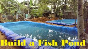 how to build a fish pond fish farming in backyard youtube