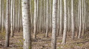 dense forest trees 4k ultra hd desktop wallpaper