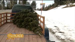 where to cut your own christmas tree in utah fox13now com