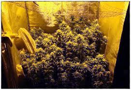 chambre de culture complete cannabis fabrication placard cannabis top cannabis pousser la tente with