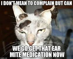 Vet Memes - for those people that wait until the last minute to go to the vet