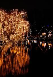 shiny tree 1 free photos 1519105 freeimages