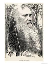 charles darwin posters at allposters com