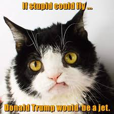 Stupid Cat Meme - lolcats stupid lol at funny cat memes funny cat pictures with