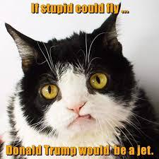 Stupid Cat Meme - good one pokey lolcats lol cat memes funny cats funny