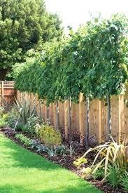 Backyard Landscaping Ideas For Privacy Backyard Plant Ideas U2013 Mobiledave Me