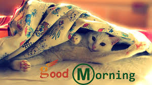 good morning wishes with cat pictures images