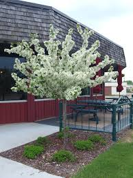 best trees for landscaping door decorations