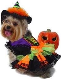 Halloween Dog Costume Spellhound Witch Halloween Dog Costume Baxterboo Halloween