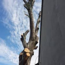 discount tree care 225 photos 18 reviews tree services san