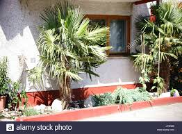 front side house plants in stock photos u0026 front side house plants