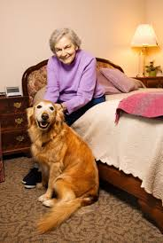 Incontinence Pads For Bed The Caregiver Partnership Incontinence Pads For Your Elderly Bedding