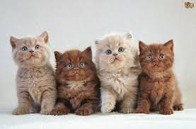 how old should kittens be before they leave their mother pets4homes