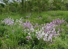 your favorite wildflower seniorsonly club