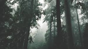 wallpaper tumblr forest pc wallpaper on tumblr photography pinterest pc and wallpaper
