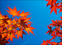 complementary color using complementary colors digital photo secrets