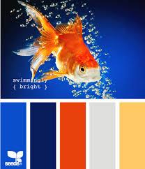 Blue Orange Color Scheme Swimmingly Bright Color Scheme Pinterest Blue Orange Design