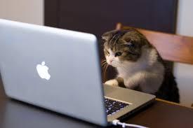 Cat Laptop Meme - create meme group group cat laptop pictures meme