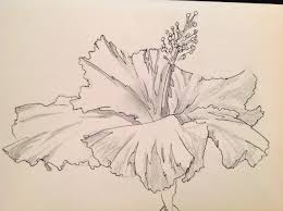 profile of a hibiscus blossom drawing art love light