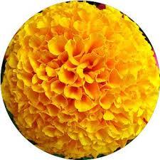 yellow flowers 33 types of yellow flowers proflowers