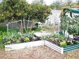 Backyard Vegetable Garden Ideas Small Backyard Vegetable Garden Design Ideas Right Vegetable