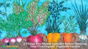 6 tips to know before planning your first organic vegetable garden