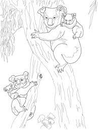 koala moms babies coloring free printable coloring pages