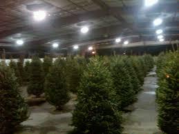 tree sales collier county fair