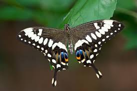 names rainforest butterflies in flight stratford upon avon