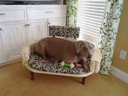 elevated dog bed with stairs dog pet photos gallery j72jd9ab5g