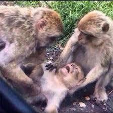 Meme Monkey - create meme адыхай2 meme monkey i am calm let me pictures